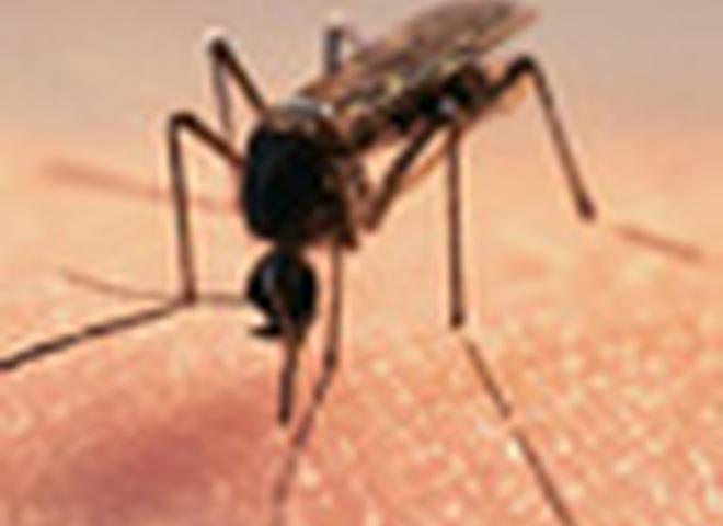 Почему комары любят женщин?
