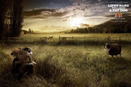 Собачья жизнь...
