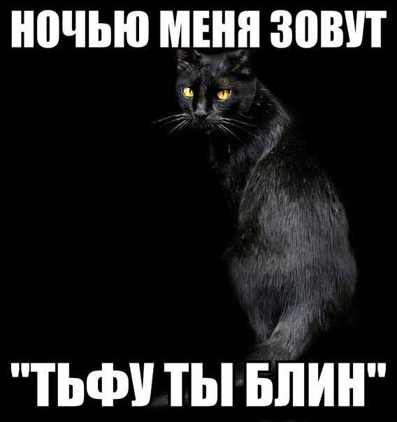 Прикол про кота и ночь