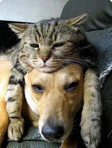 Милая подборка с лучшими друзьями