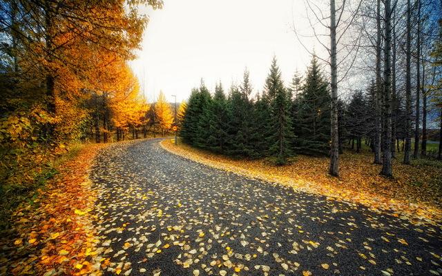 Осень и дорога