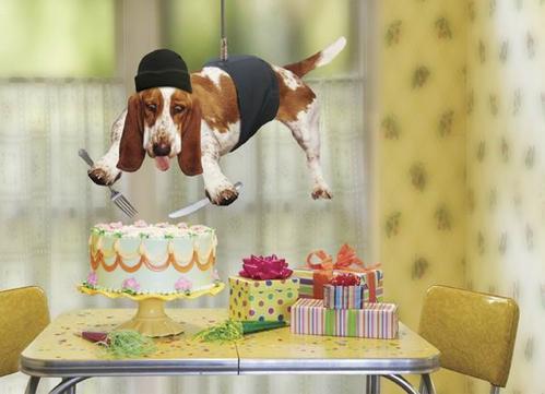 Торт в студию!