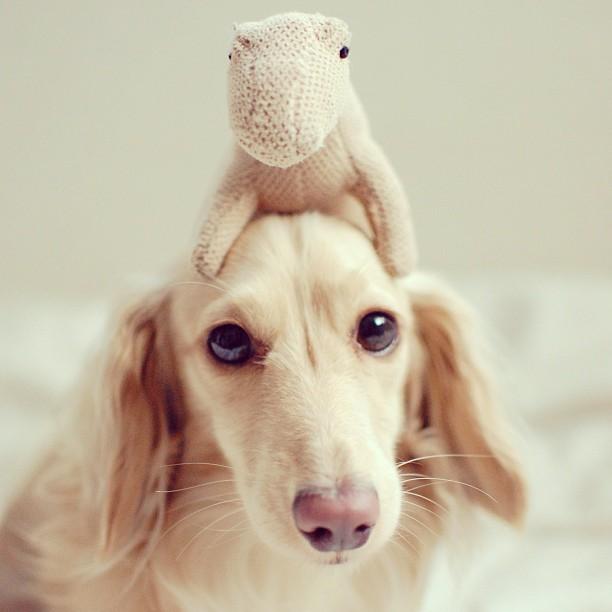 Животные в Instagram: милейшая Бэтти