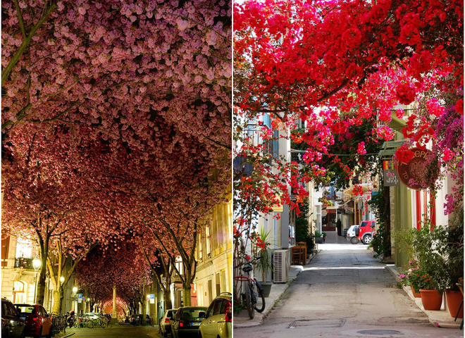 Чарівні вулиці в тіні дерев і квітів
