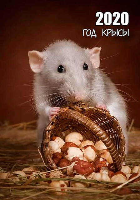 Открытка к Новому году крысы 2020