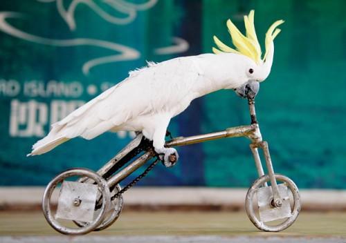 Спортсмены попугаи