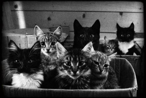 Котов много не бывает