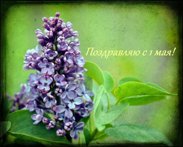 Красивая открытка с Первомаем