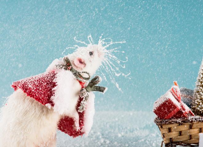 Погода на Новий рік: чи буде сніг в саму чарівну ніч року?