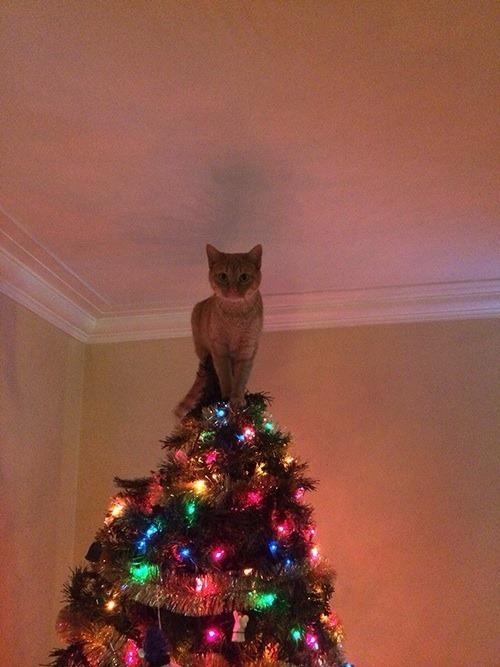 На елке не хватало звездочки
