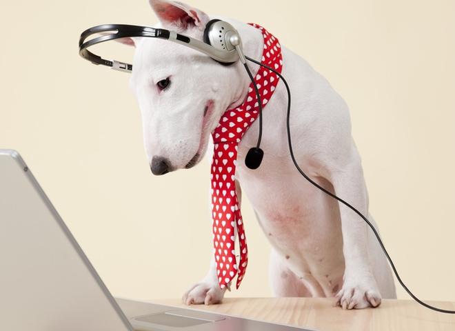 мобільний для собаки