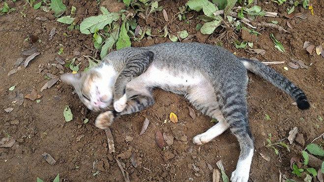 Скорбящая по хозяйке кошка уже год живёт на её могиле
