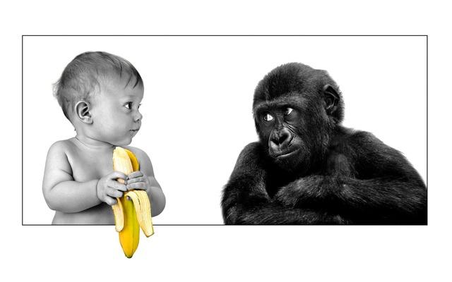 Малыш и обезьяна