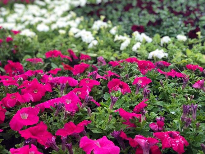 В центре Киева появится настоящее цветочное сафари