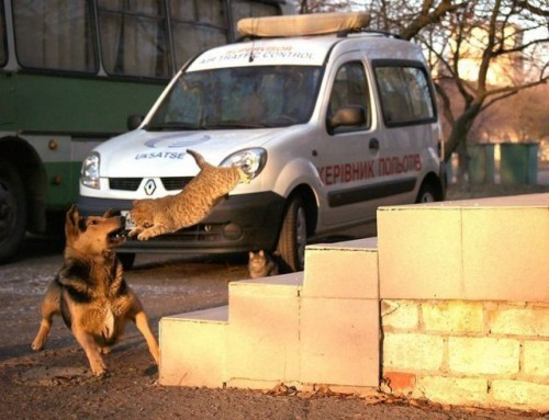 Животные атакуют