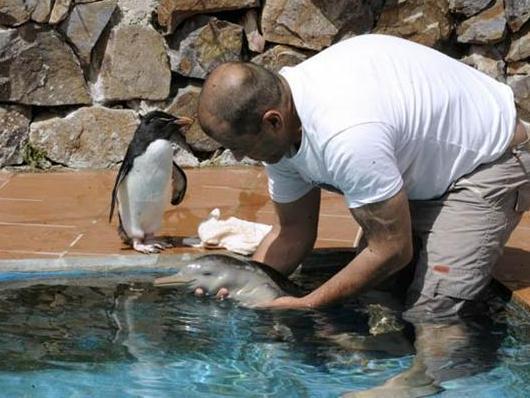 спасение дельфиненка