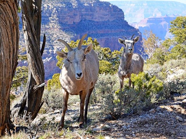 Національні парки світу: Національний парк Гранд-Каньйон