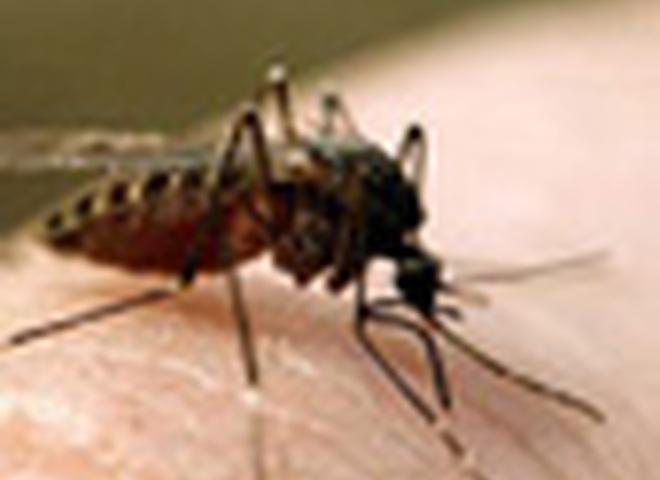 Комаринные укусы