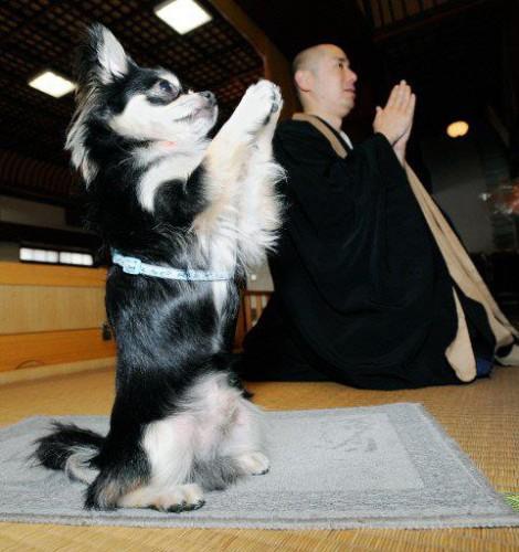 Собака - у аллаха просяка