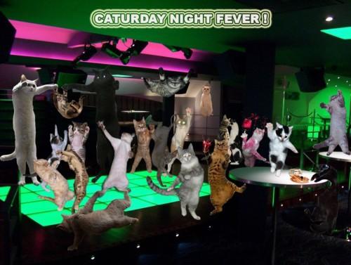Кошачья вечеринка!!!