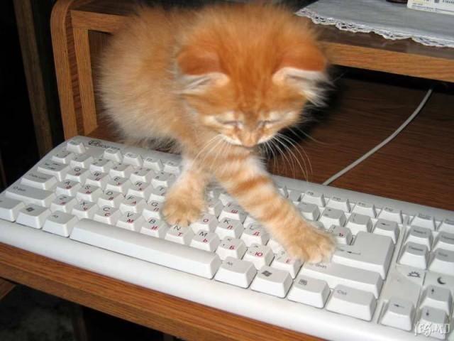 Если бы системные администраторы были котиками
