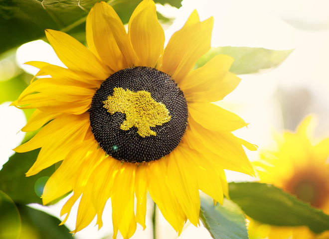Погода на День Незалежності України