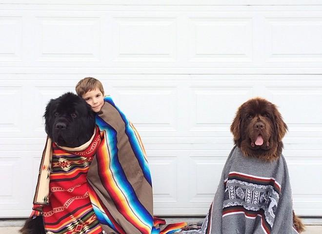 Джулиан и его собаки