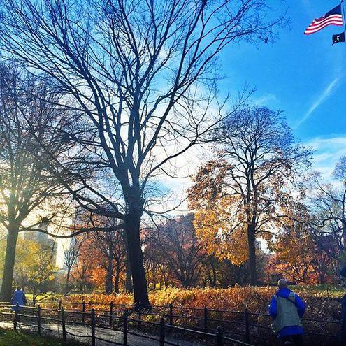 Чехова в Нью-Йорке