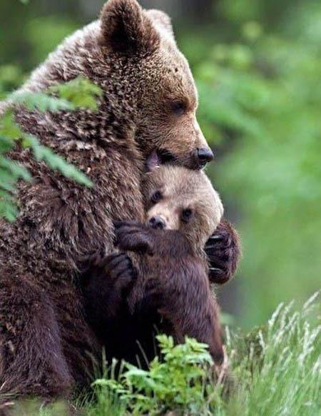 Обнимашки среди животных