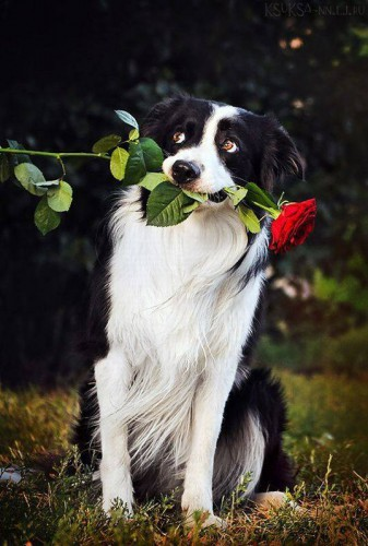 Собаки умиляки