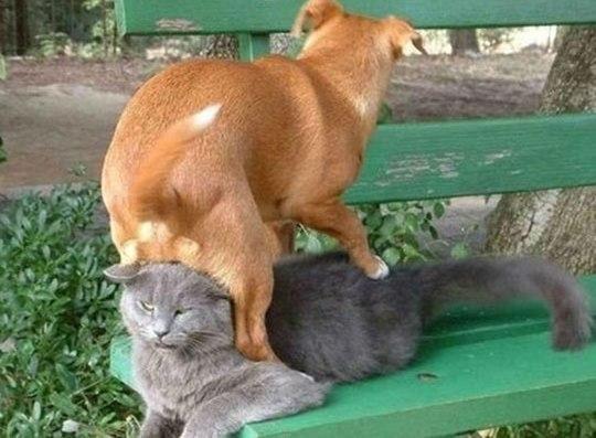 """Собачки, которые """"обожают"""" котов"""