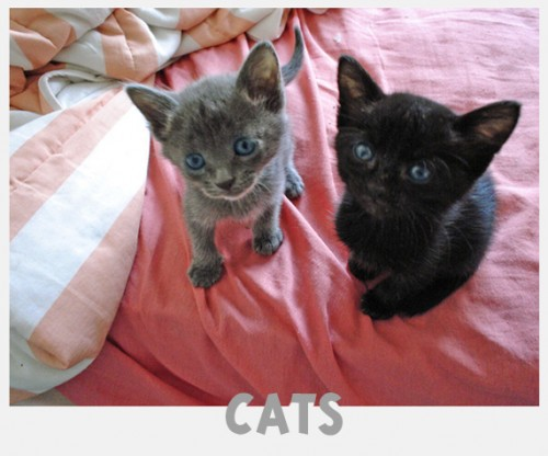 Коты - на них можно смотреть вечно