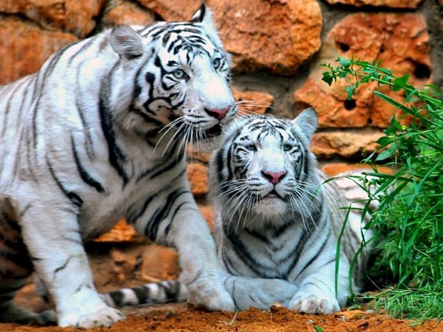 Цікаві місця Хайфи: зоопарк Ган аЕм