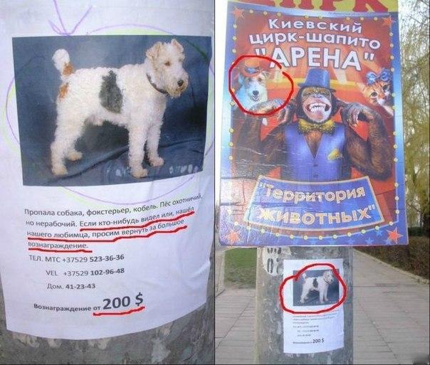 Пропала собака. Прикольное фото