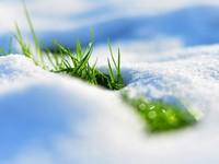 Трава в снегу