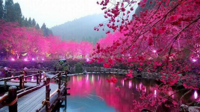 ТОП-5 самых красивых весенних городов