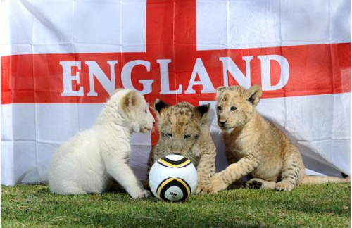Львы футболисты