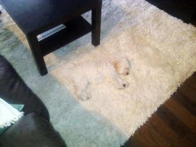 Собачки играют в прятки