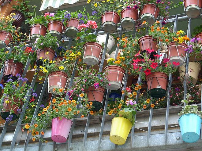 Как и какие выращивать цветы на балконе, разбираемся в нюанс.