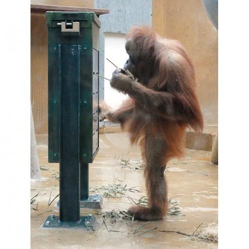 Бегом от обезьяны к человеку=))))