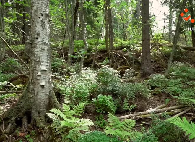 Лааяасало – фінський острів з історією