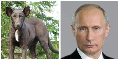 Собака, похожая на Путина