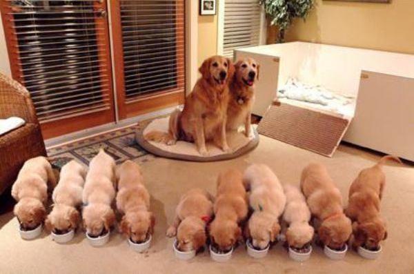 """Няшная подборка """"Счастливая семья"""""""
