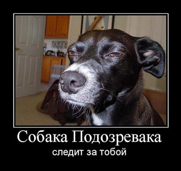 ТОП лучших демотиваторов про собак