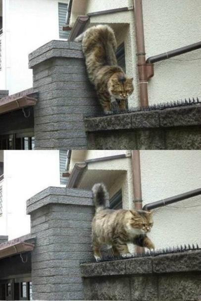 Настоящая котячая любовь