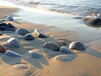 Бреговые камни