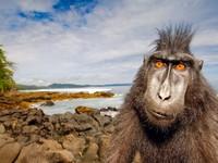 Прикольная обезьяна на берегу