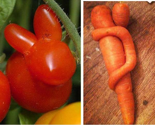 Природа развлекается или смешные овощи