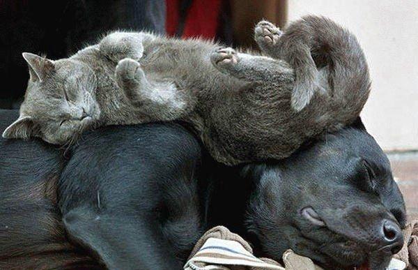 Спят усталые детишки..
