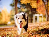 Собачка в осеннем парке